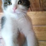 E' STATA ADOTTATA .Questa dolcissima micia. è in cerca di casa, è una femminuccia e ha 3 mesi.!