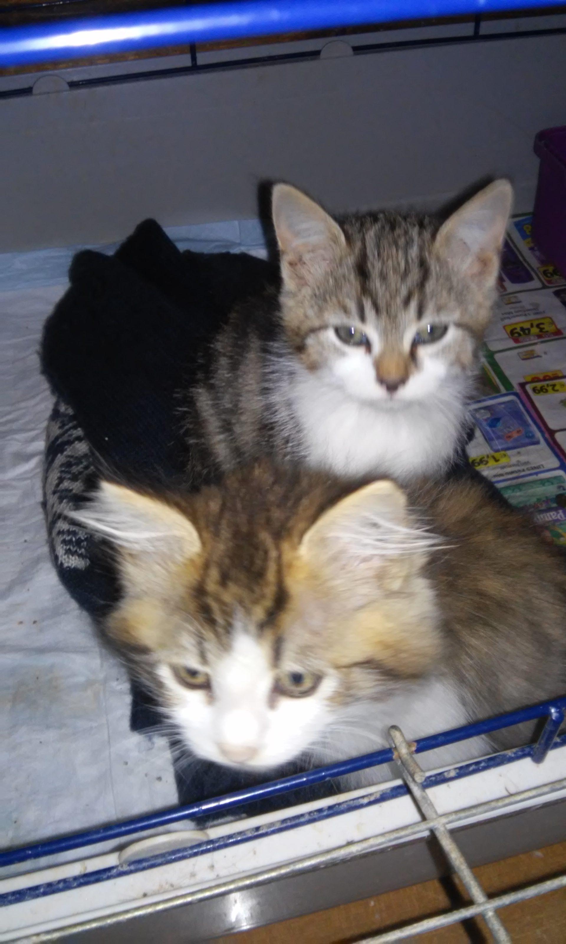 SONO STATI ADOTTATI Questi piccolini sono in cerca di casa, sono un maschietto e una femminuccia! hanno 3 mesi.