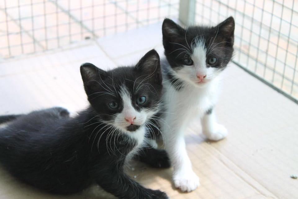 SONO STATI ADOTTATI Questi piccolini dolcissimi sono in cerca di casa. Sono 1 maschietto e 1 femminuccia.
